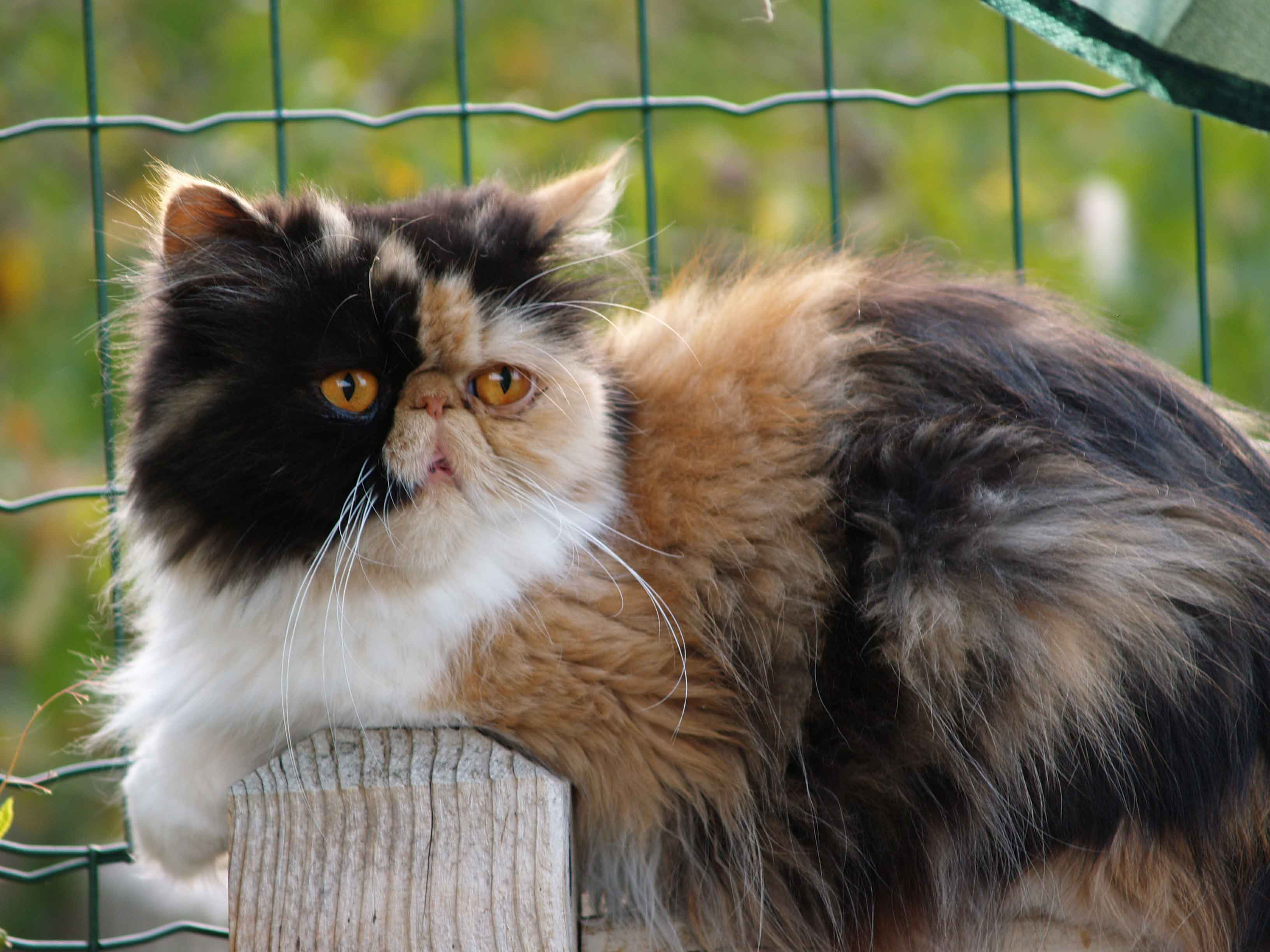 rencontre chat coco aveyron